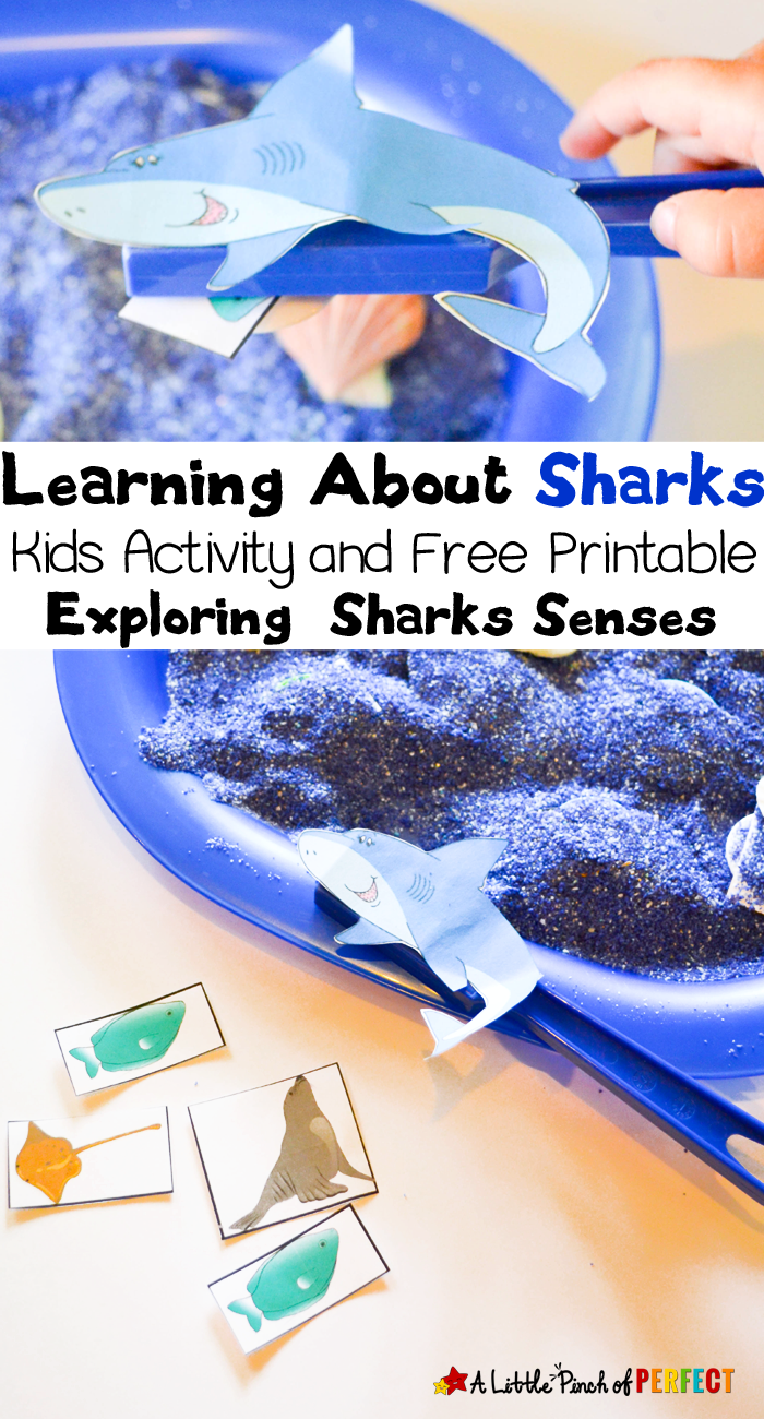 25+ Shark Week Crafts and Activities for Kids - Natural ...