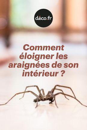 Comment éloigner les araignées de son intérieur ?