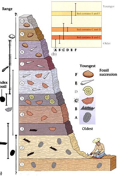 stratigraphy and radiometric dating worksheet