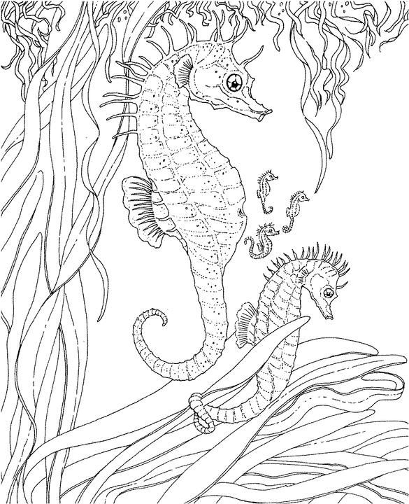 seascape - ocean coloring page more advanced coloring pages - for ... - Mom Baby Horse Coloring Pages