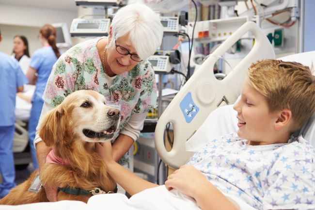 The Pet Therapy Will Make The Children So Happy To See Them Smile