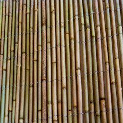 Canisse En Bambou Entier Largeur 3 M Hauteur 2 M