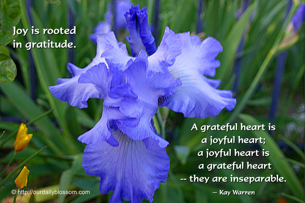 Joy is routed in gratatude a wonderful life pinterest joy is routed in gratatude izmirmasajfo