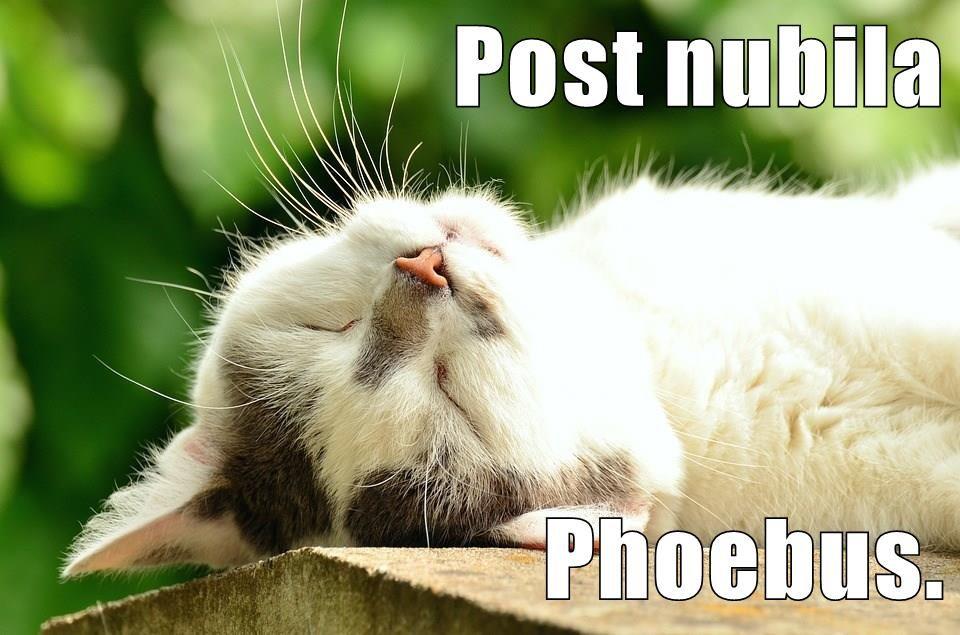Post Nubila Phoebus After The Clouds Sunshine Pets Cat Shots Animals