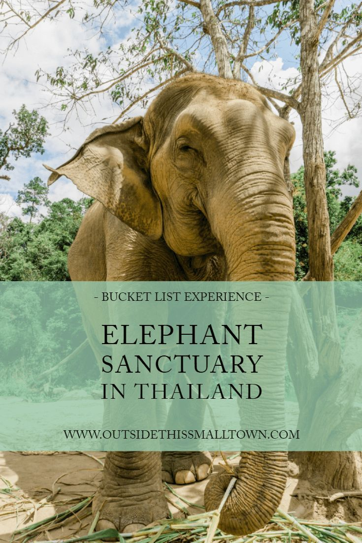 A Bucket List Experience: Elephant Jungle Sanctuary in Chiang Mai, Thailand #smalltowntravel