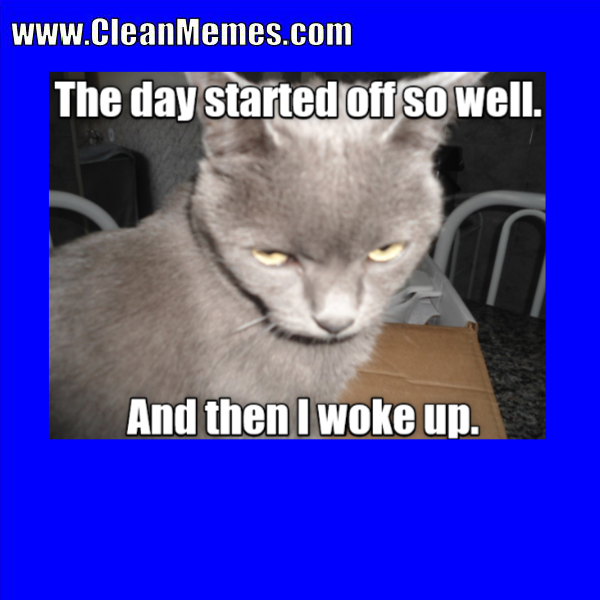 Funny Cat Meme Clean : Pin by clean memes on pinterest