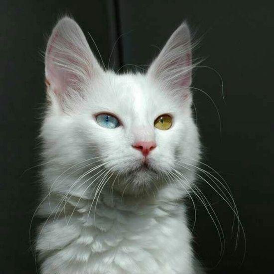 feline natural cat food