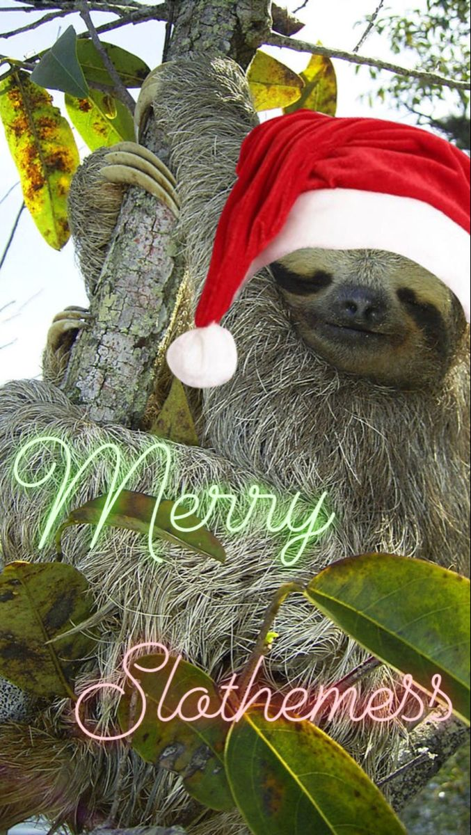 Do you need more sloth in your Christmas this year? Is