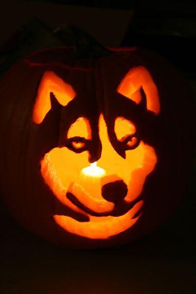 Husky Pumpkin Template In Case Ivan Feels Like Carving