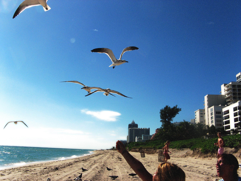 Miami - noviembre 2010