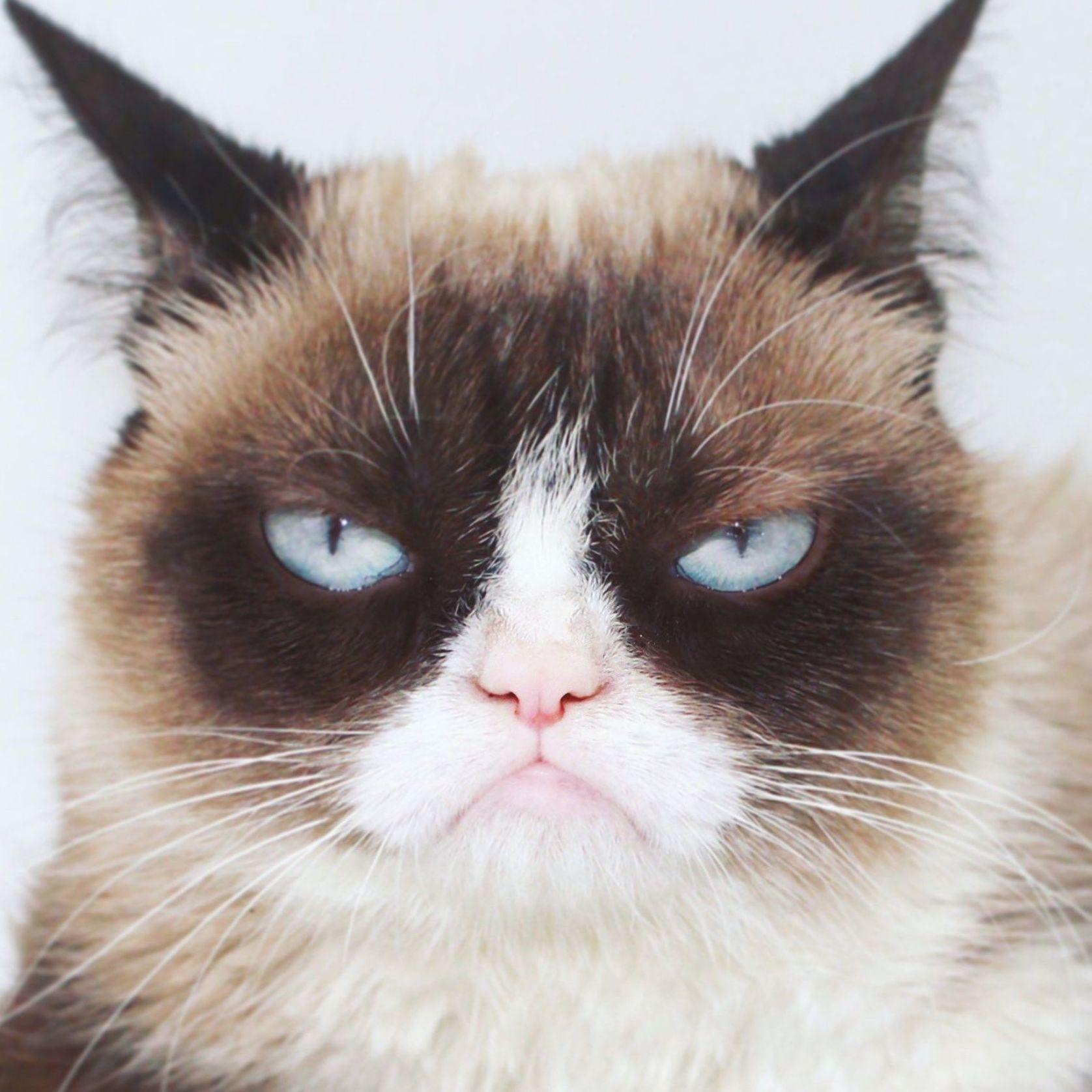 """Grumpy Cat on Twitter """"… """" Grumpy cat breed, Grumpy cat"""