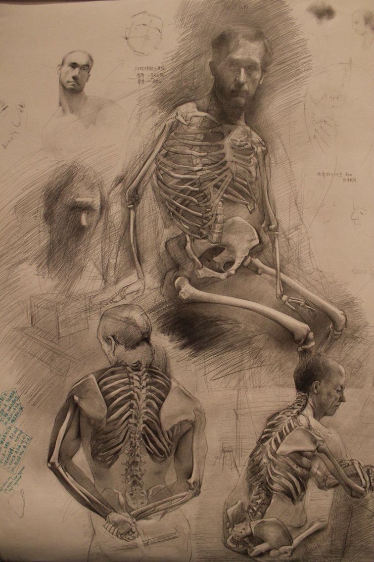 Xiong Xuan (Melancholy), from Michael\'s anatomy class, pencil on ...