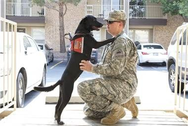 'They aren't like normal pets'  Before January, service dogs were permitted on Army posts as per the American Disabilities Act (ADA), which requires businesses to allow people with disabilities to enter with service animals.