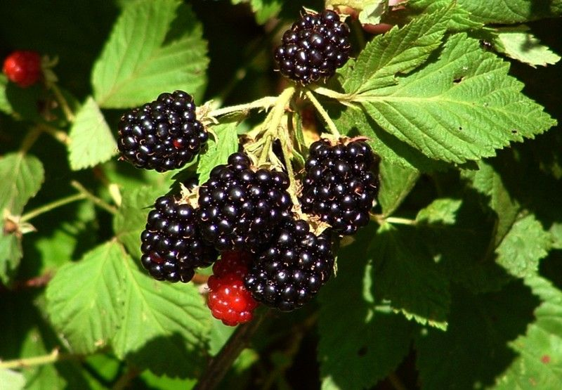 10 Plants Native Americans Used to Cure Everything And Even Cancer