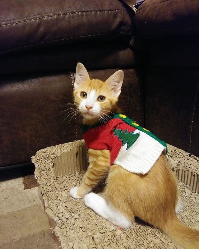 Pumpkin makes an ugly Christmas sweater look pretty good! Submitted ...