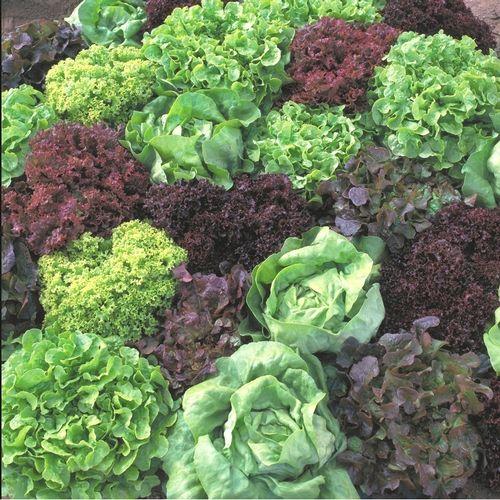 Grow Your Own Salad Bar ideas from National Garden Bureau