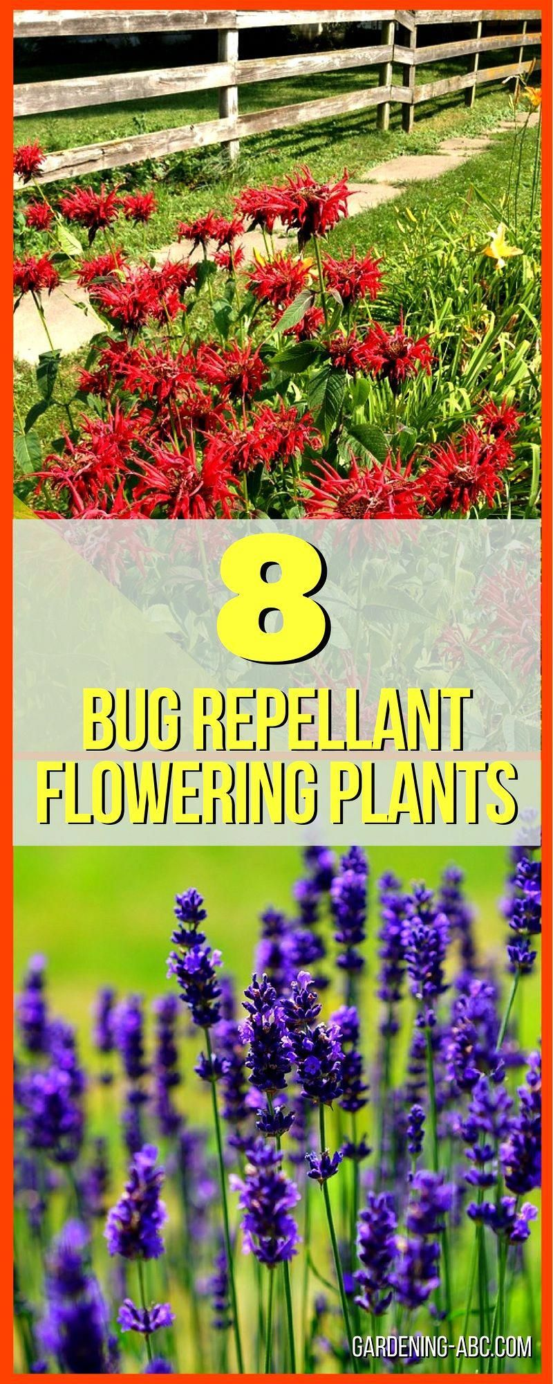 8 Plants That Not Only Work As Bug Repellent but Also Look Good in Garden #pesttreatment,pestcontrol,doityourselfpestcontrol,pestcontrolservices,pestrepeller,preventivepestcontrol,homepestcontrol,bestpestcontrol,electronicpestcontrol,pestinspection,organicpestcontrol #mosquitoplants