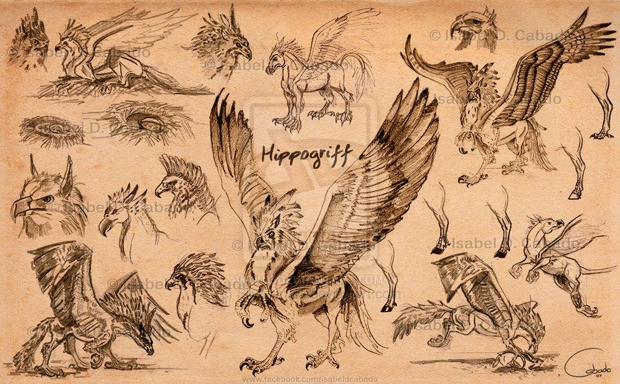 Hippogriff Sketches By Isabel D Cabado Https Www Facebook Com Isabeldcabado Http Silver Iruka Deviantart Com Harry Potter Creatures Sketches Harry Potter