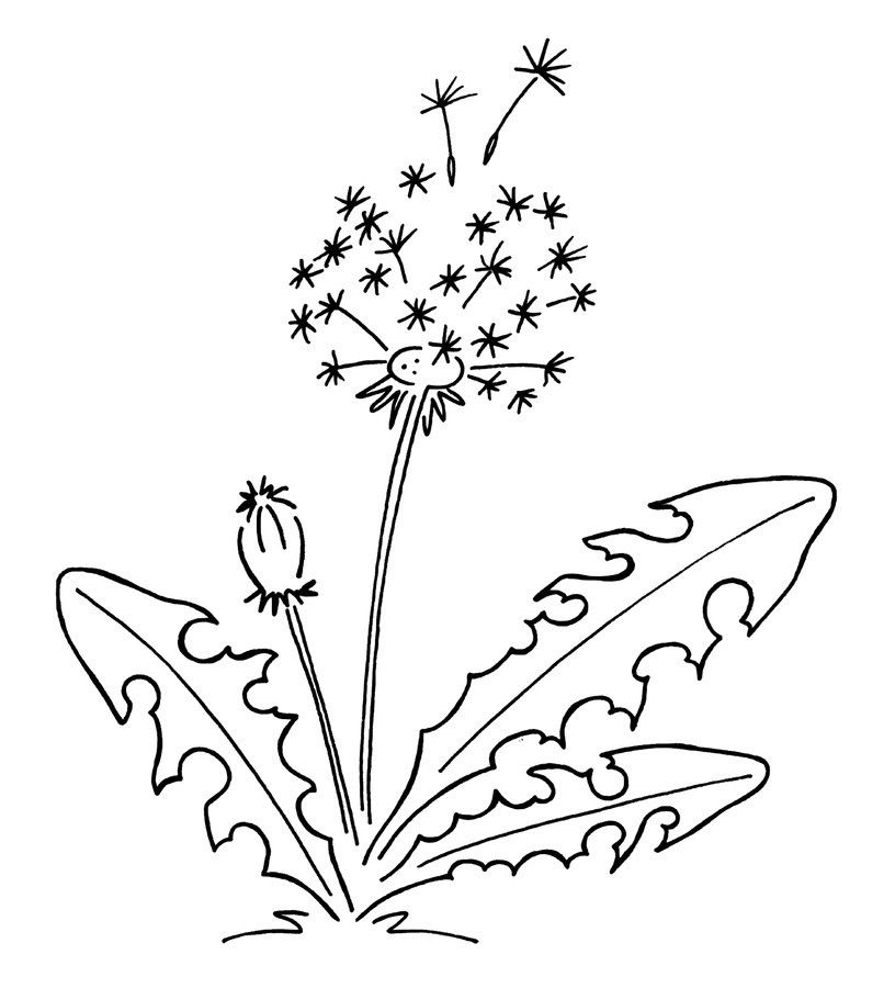 pin von leeann welles auf kids  löwenzahn zeichnung