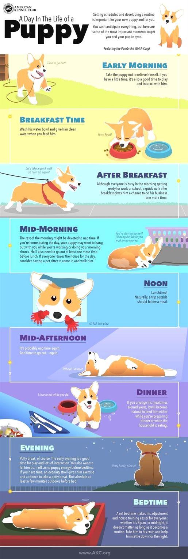 Dog Training In Atlanta Dog Training No Leash Dog Training