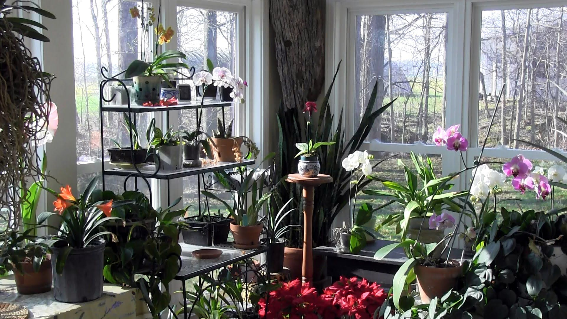 The Sunroom at its Finest: An Indoor Garden in Bloom