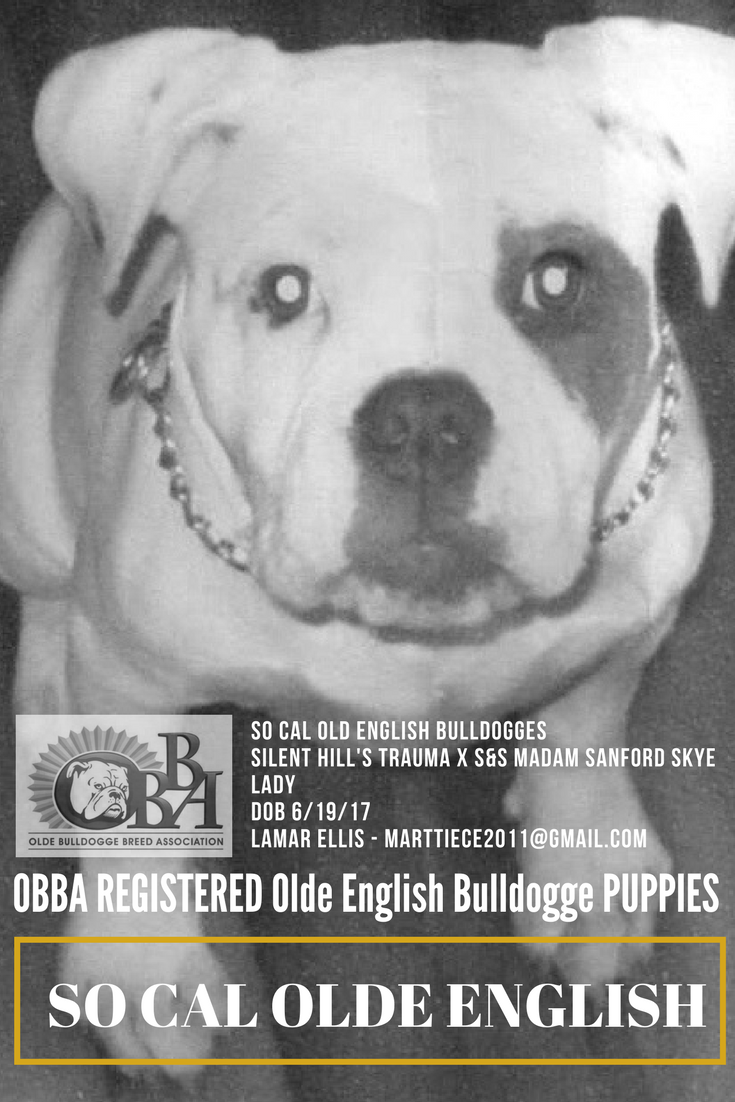 Litter Announcement Congrats Lamar Thank You For Choosing The Obba Again So Cal Old English Bulldogges Sil Puppies For Sale Puppies Olde English Bulldogge