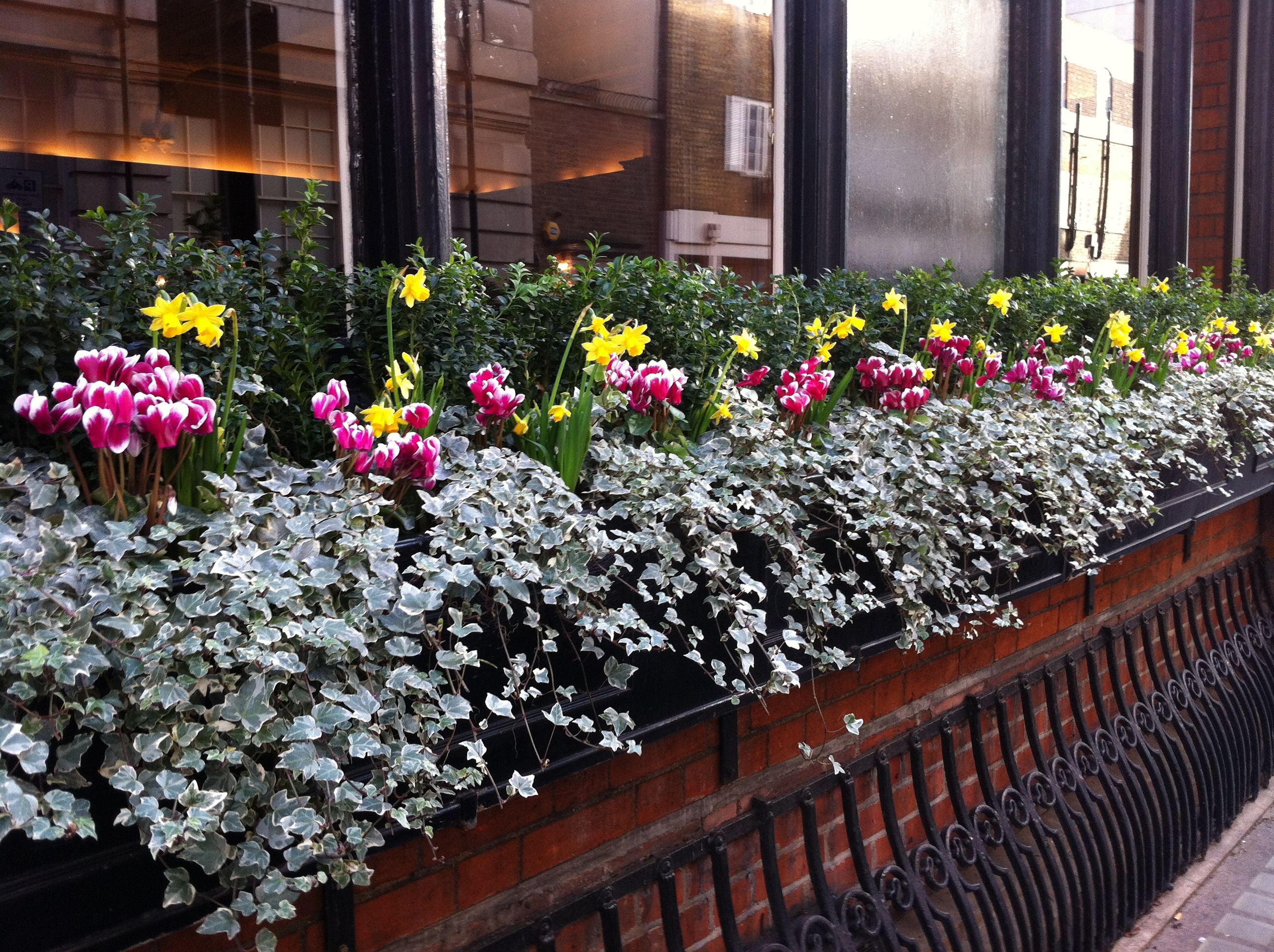 Window box planted with spring colourful flowering plants