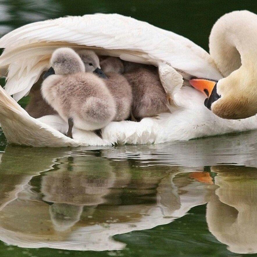 Mom /& Child Stamp Swan