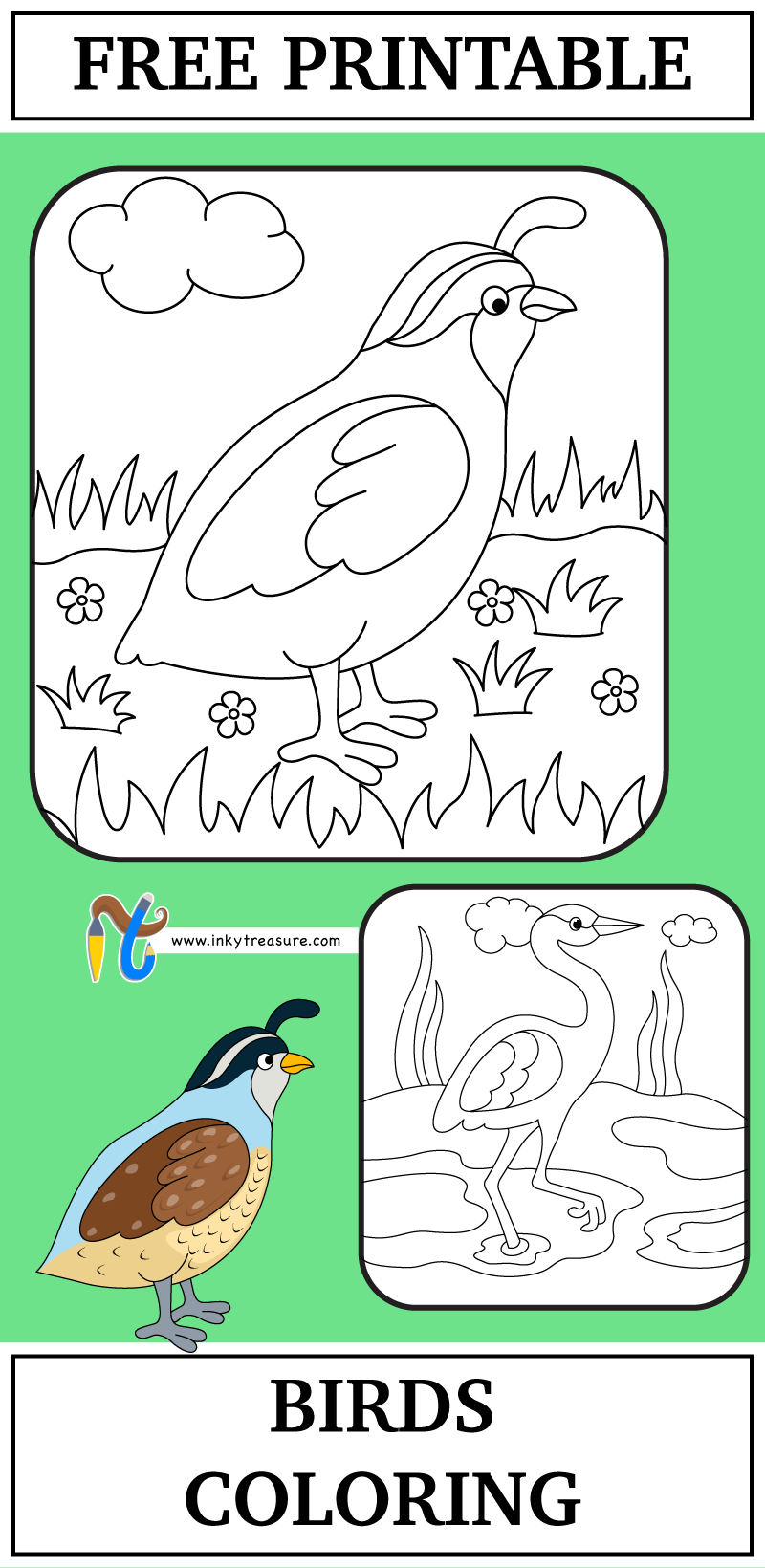 We have 2 Birds Crane and Quail Coloring Worksheet and these are ...