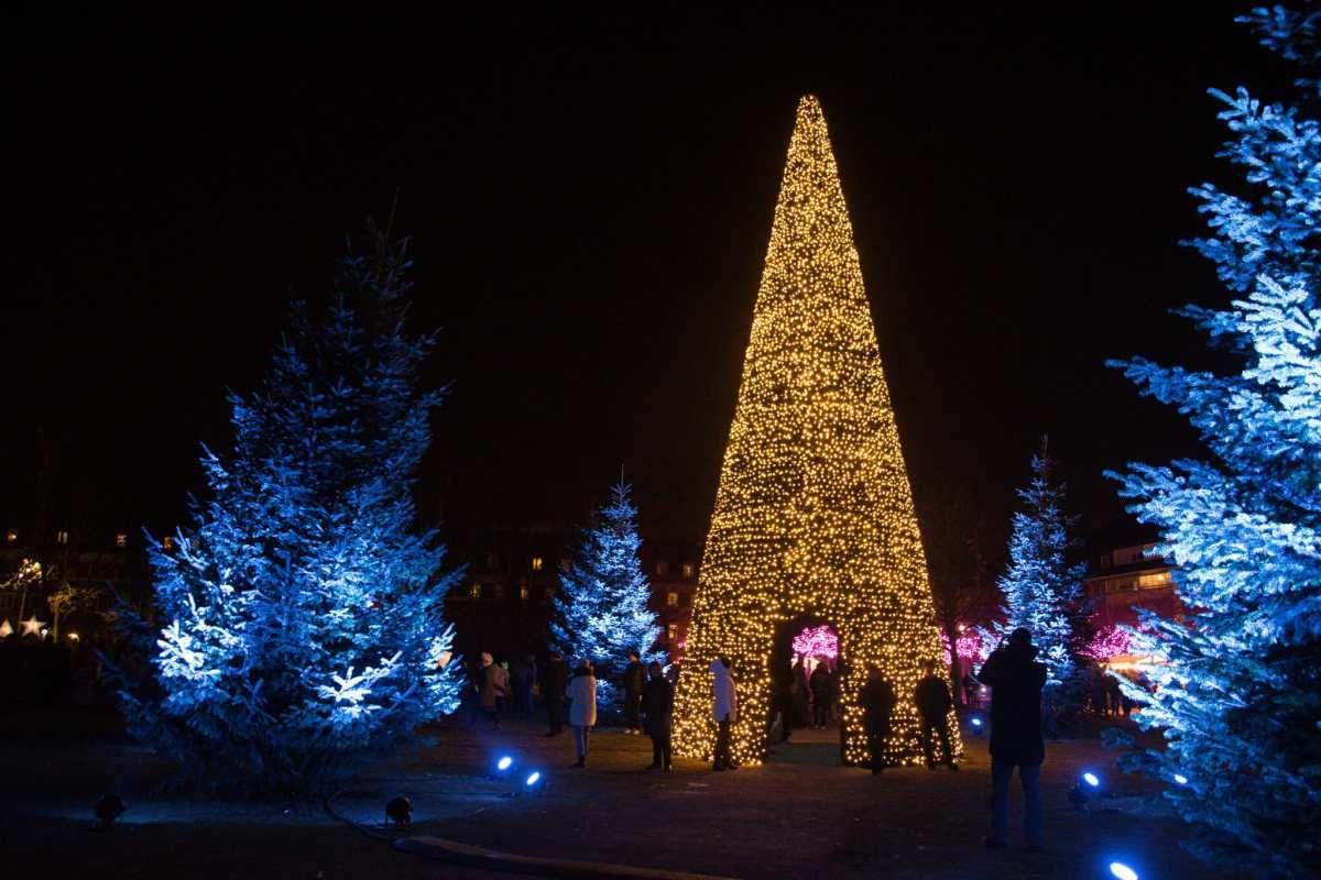Make Christmas Memories See Holiday Lights In Asheville Nc Holiday Lights Holiday Lights Display Christmas Memory