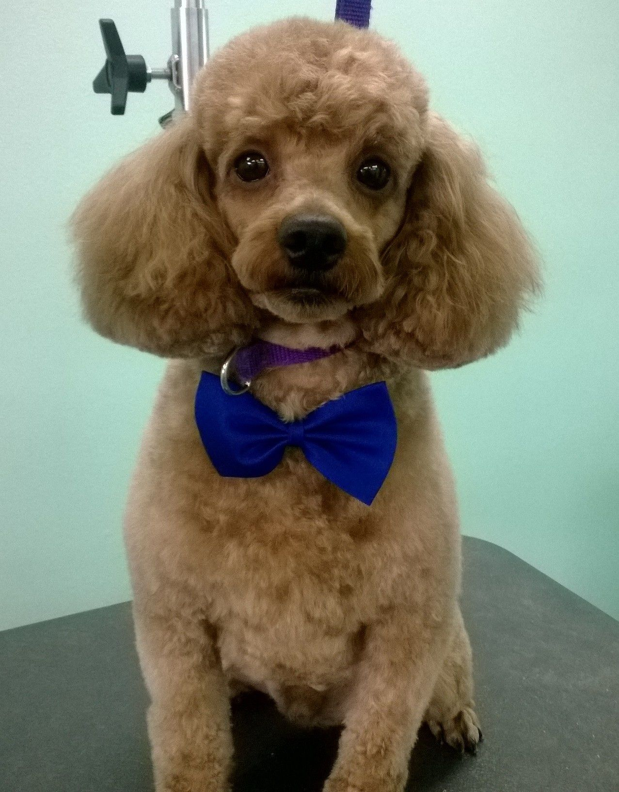 The UpScale Tail, Pet Grooming Salon, Naperville www.theupscaletail.us ✂️