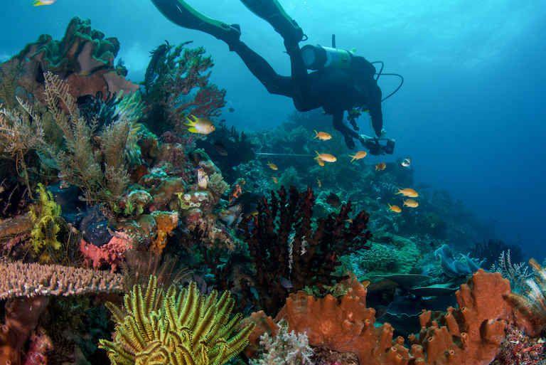 El cambio climático hace que algunos peces sean más pequeños y otros más grandes
