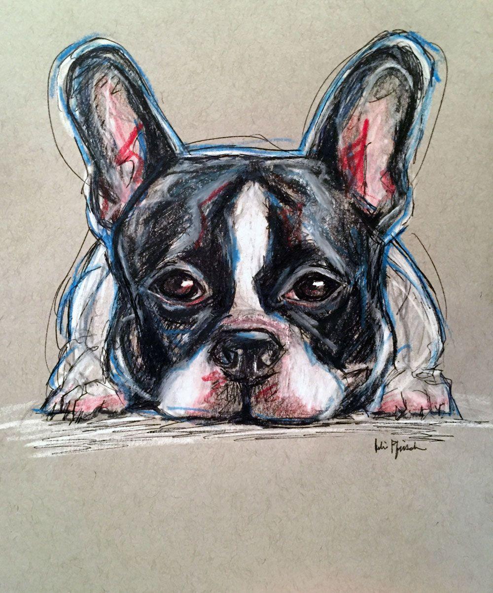 Johnny the French Bulldog Pet portrait sketch pencil colored