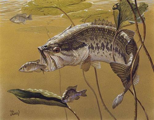 Pin By Larry Ball On Bass Fishing Pinterest Fish Bass Fishing And Bass