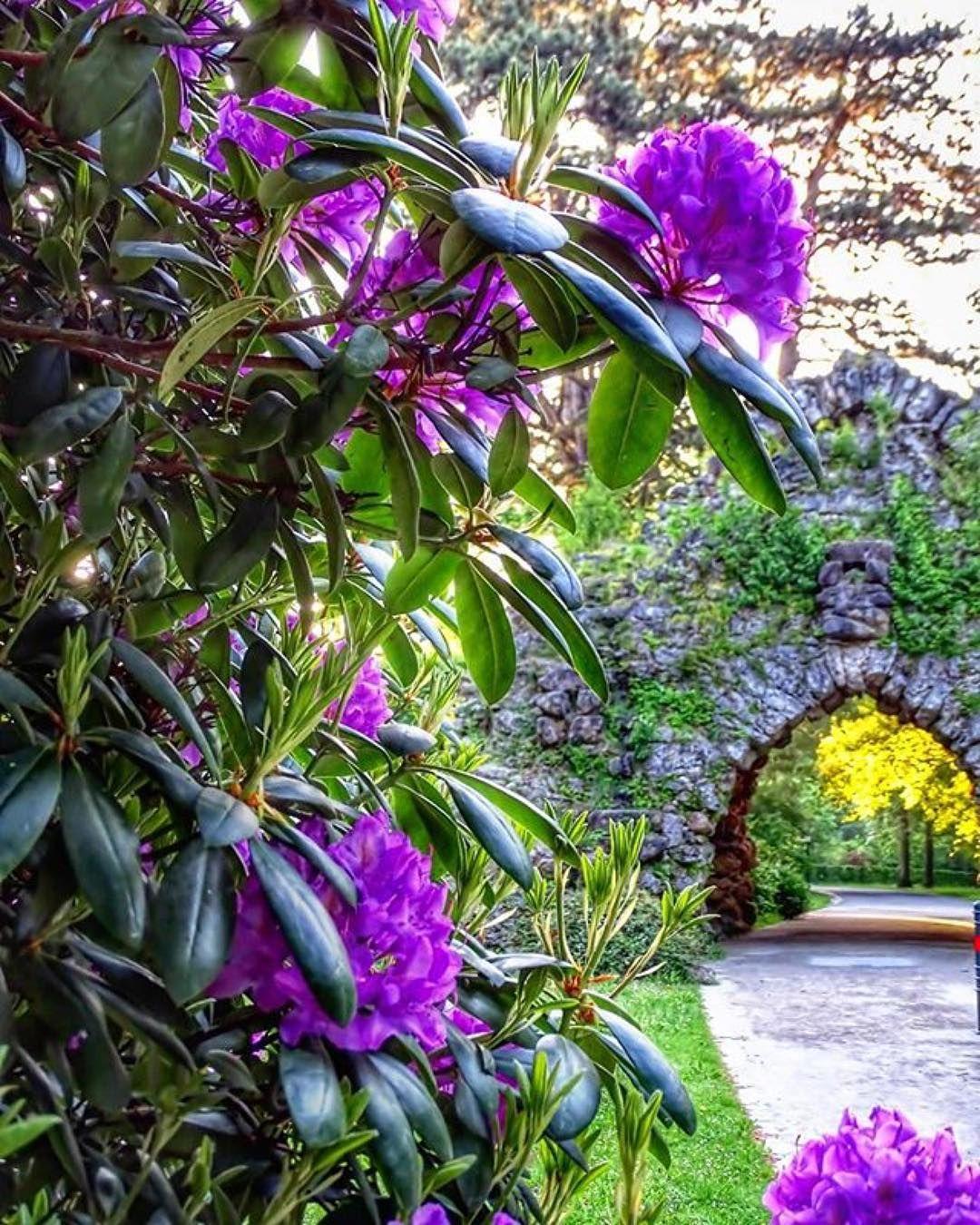 Wunderbare Blutenpracht Am Parnass In Der Eremitage Beautiful Blossoms In The Hermitage In Bayreuth Ramona Sch Plants