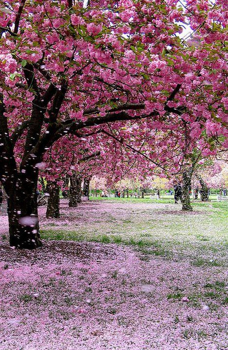 I Want To Lay In The Grass And Have Flower Petals Rain Down On Me Tree Photography Beautiful Nature Beautiful Photography Nature