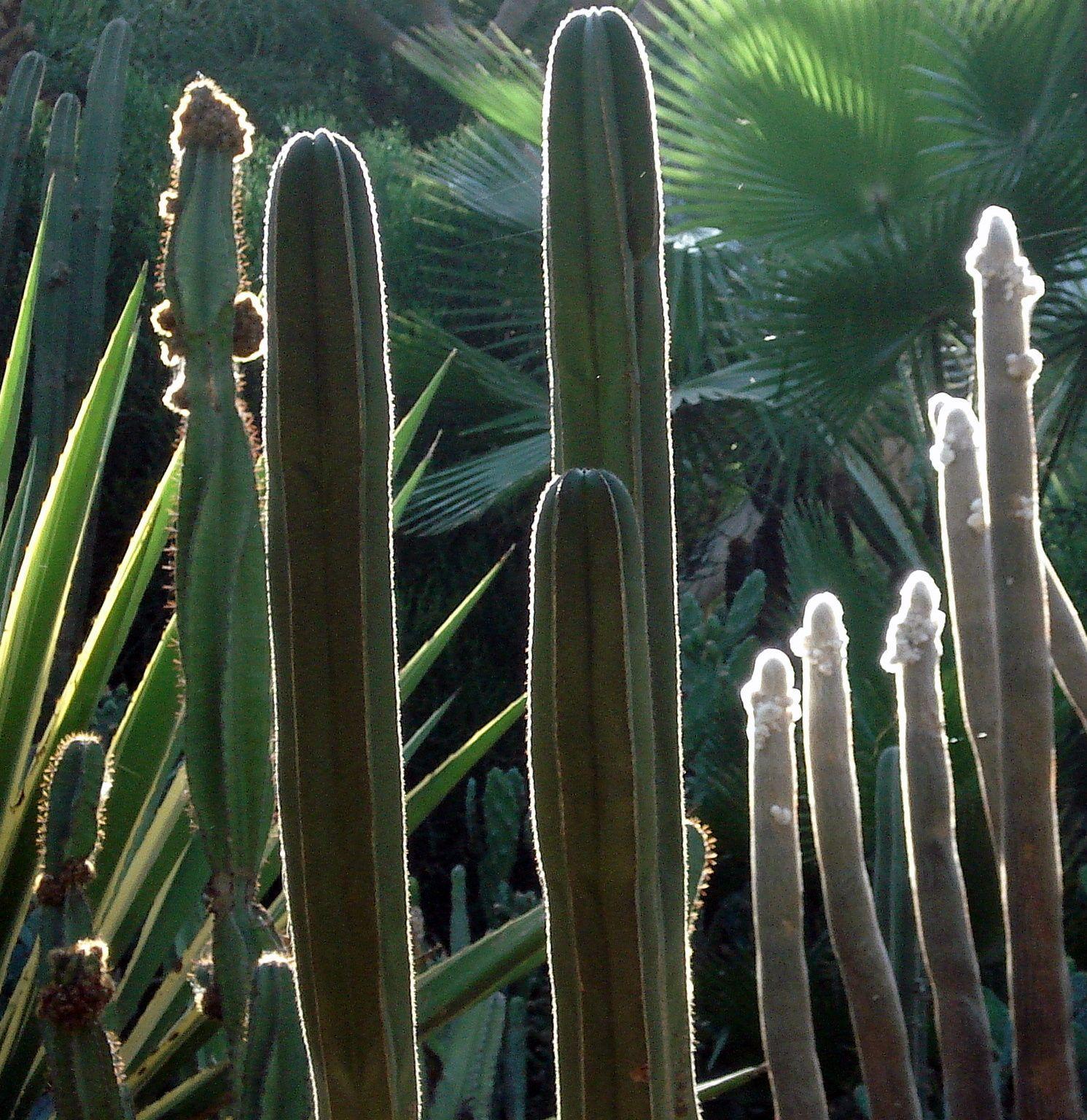 Jardins de Majorelle - Marrakesh