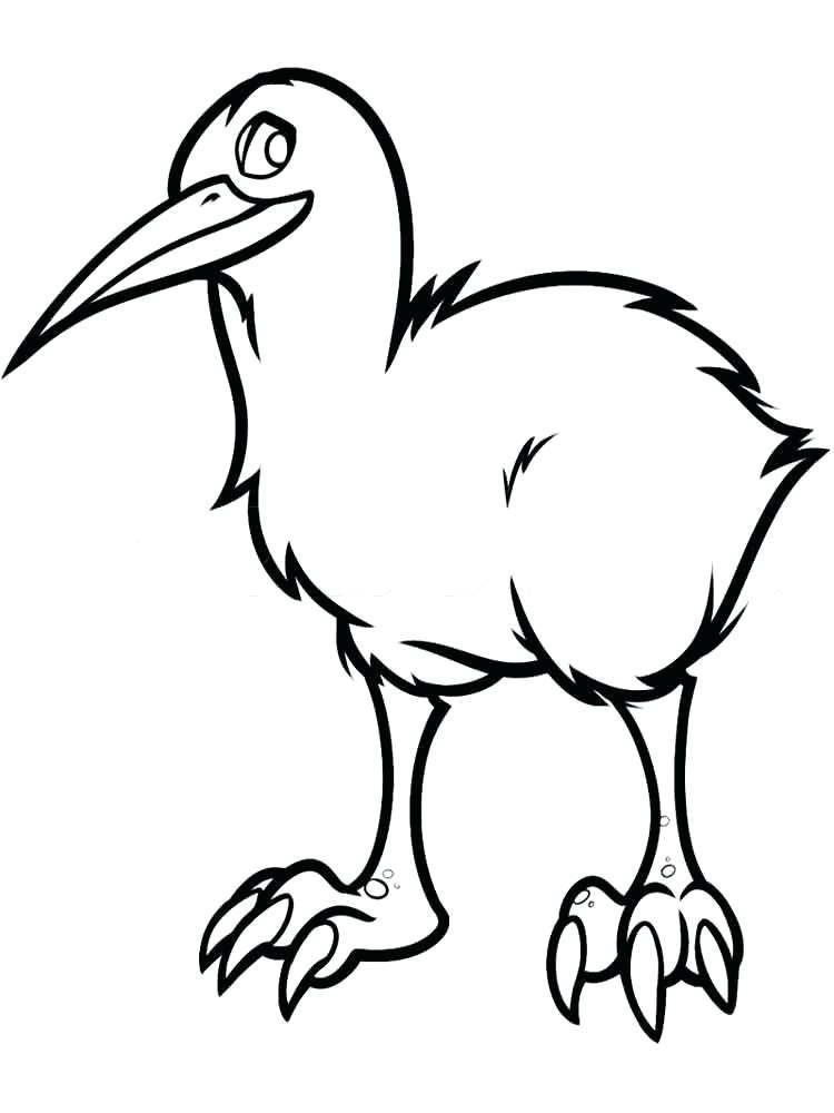 Kiwi Coloring Page Free Kiwi Is The Name Of A Bird That Is Easily