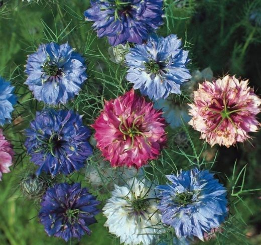 Nama Bunga Dan Gambar