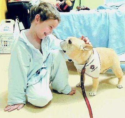 Taking Your Dog To Visit Nursing Homes