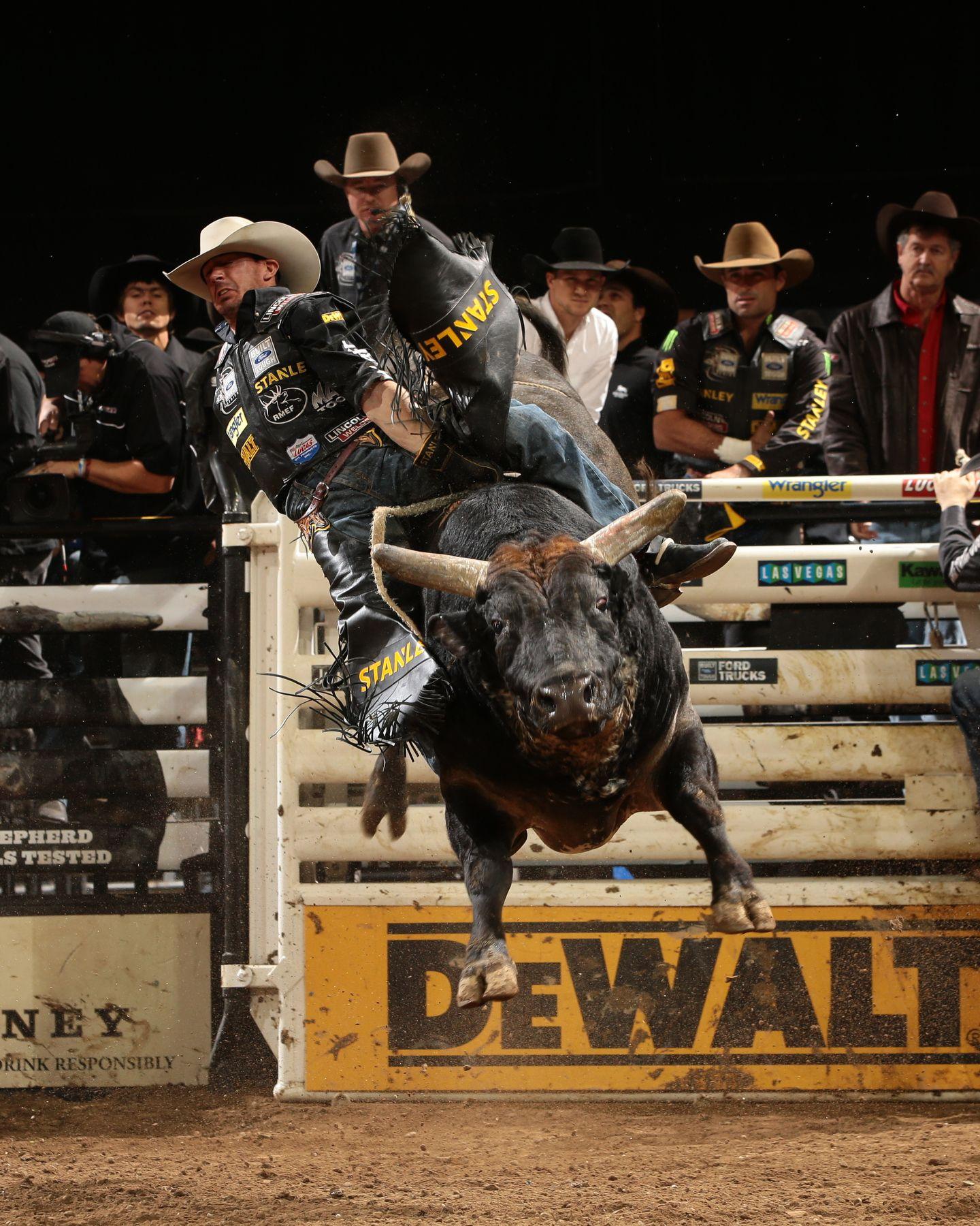 pbr bull riding bull