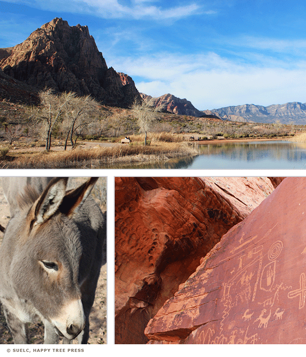 Spring Mountain Ranch State Park, Wild young burro, Valley of Fire petroglyphs, Little Sunny Studio