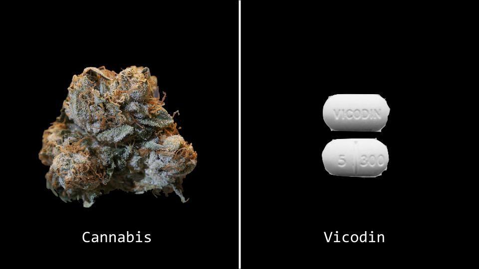 Vicodin anal use, skinny blonde girl masturbating