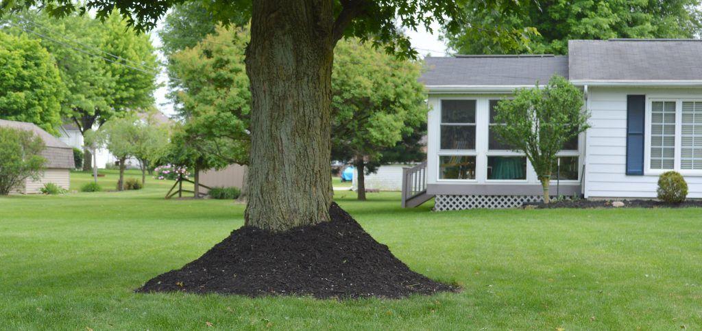 Mulch Alternatives Around Trees Gardens And Gardening Pinterest