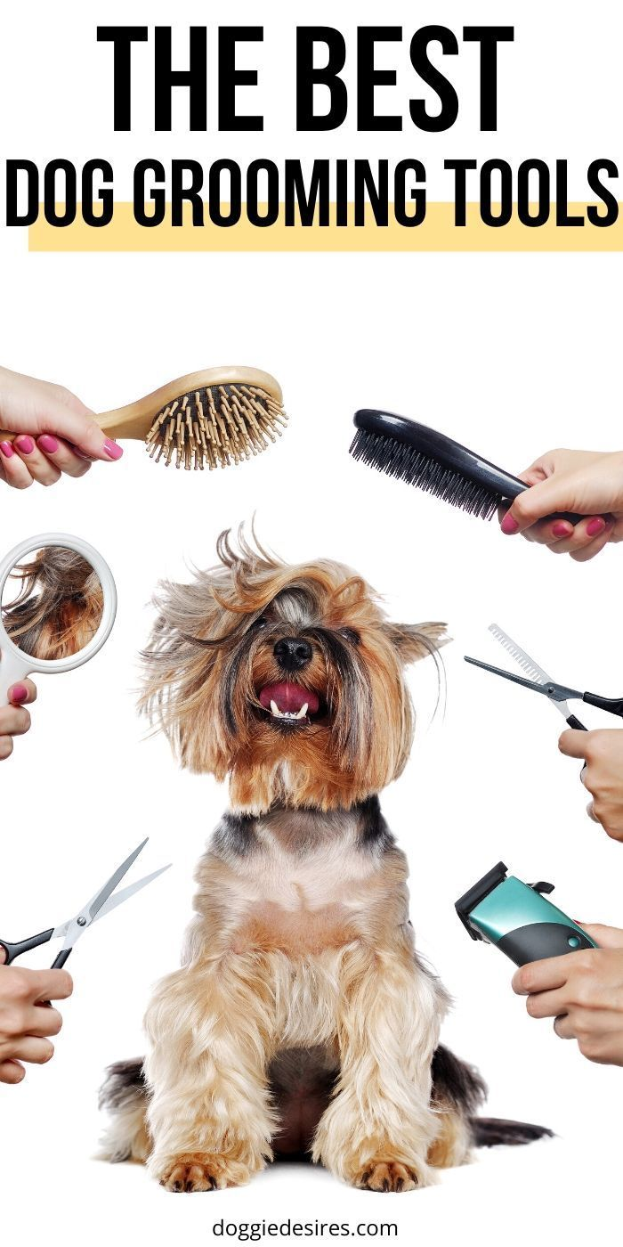 The Best Dog Grooming Tools For Dog Owners Out There