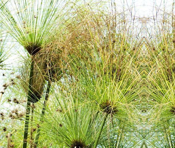 SET of 3 CANVAS PRINTS Botanical Wall Art White Green Pattern ...
