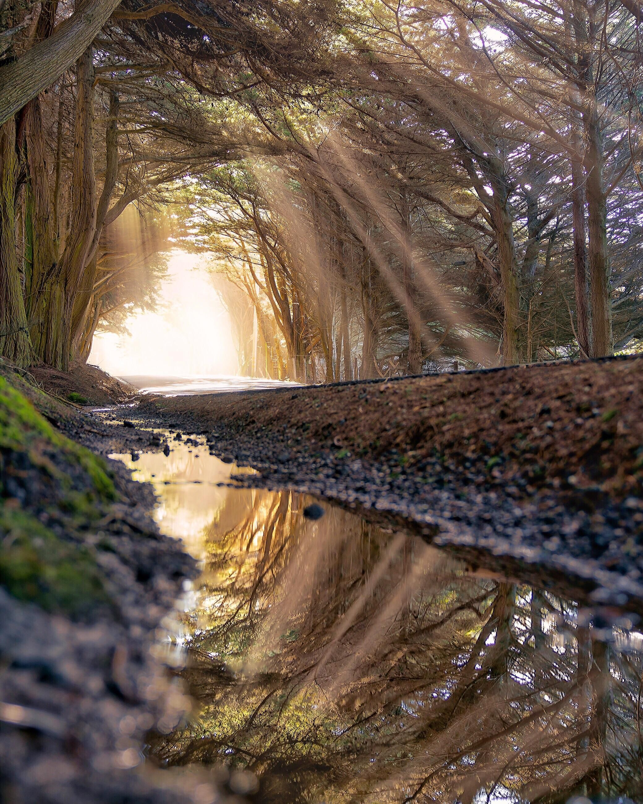 My favorite tunnel of trees north of Fort Bragg, California