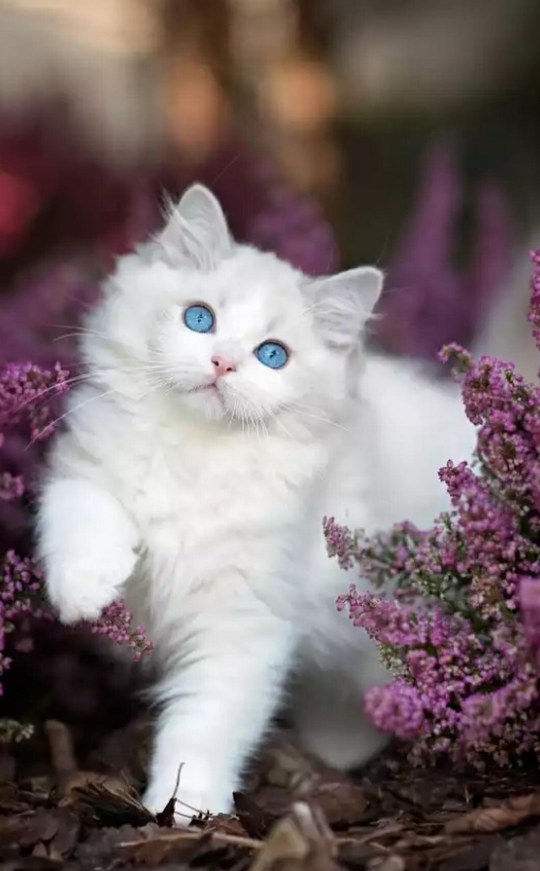 Adorable kitten with beautiful blue eyes Kittens cutest