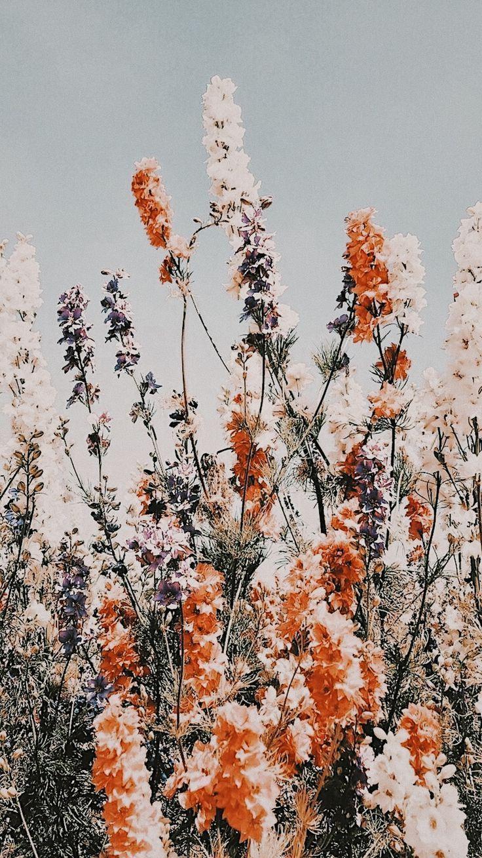 Blumen warme Jahreszeit Grünfläche Sommerstimmung gute Laune #blumen #garten ...