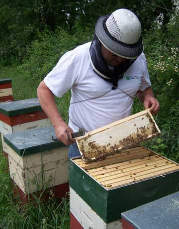DIY Backyard Beekeeping: A Guide for Beginners | Out of ...